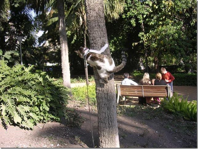 gatos migallinero - (2)
