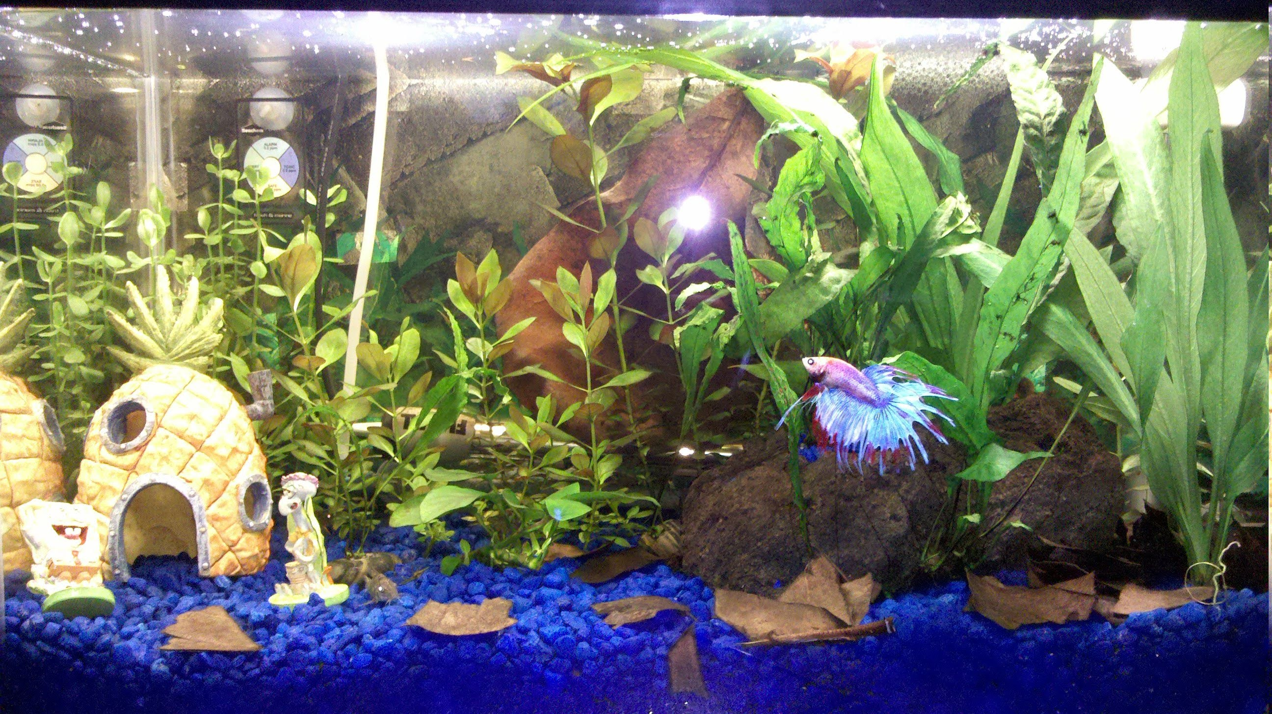 Fish aquarium edmonton - Again Anyone Recommend Any Plants I Should Look To Order For This Tank Want To Order From These Forums