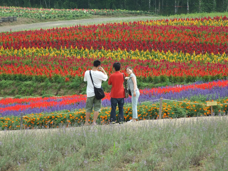Kazewong biei flower fields biei flower fields dscf2382g mightylinksfo