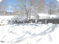 1.27.11 snowstorm sideyard