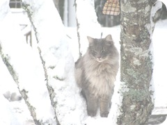 1.30.11 fluffpuff in snowy tree