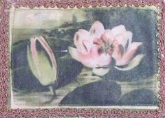 pink pond lily fabric postcard