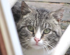 stray kitty peeking thru lawn chair