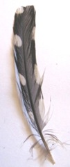 black and white small feather