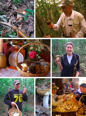 Mushroom Hunting, Le Marche Italy, La Tavola Marche