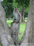 nomad4ever_malaysia_langkawi_IMG_1124.jpg