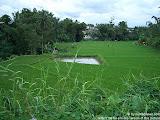 nomad4ever_indonesia_sulawesi_manado_bunaken_CIMG2473.jpg