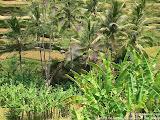 nomad4ever_indonesia_bali_landscape_CIMG1857.jpg