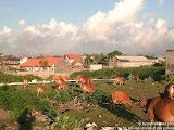 nomad4ever_indonesia_bali_landscape_CIMG2857.jpg