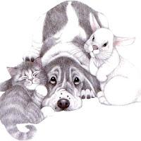 CatDog's4.jpg