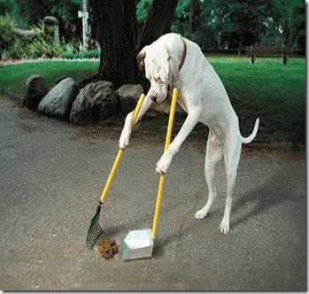 Dog Cleaning Up