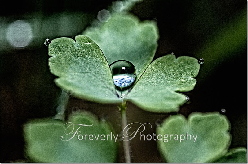 raindrops-14