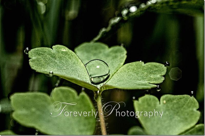 raindrops-16