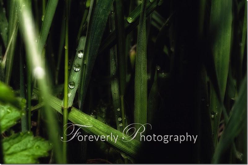 raindrops-18