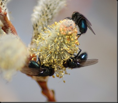 small file. pollen theves