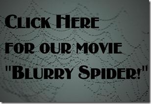 blurry spider