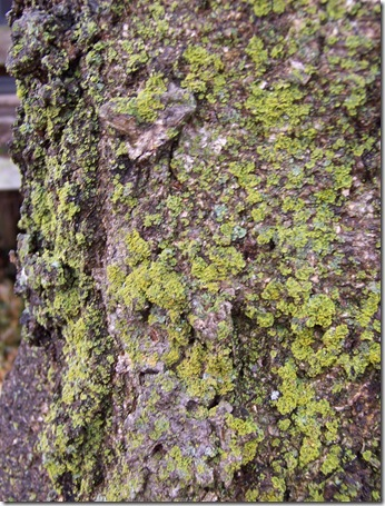 tree with texture