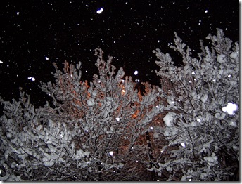 snow trees and street light