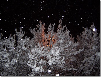 snow on trees and street light