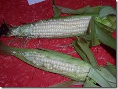 corn 9.12.09 002