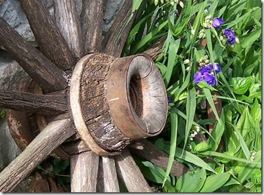 wagon wheel and spiderwort