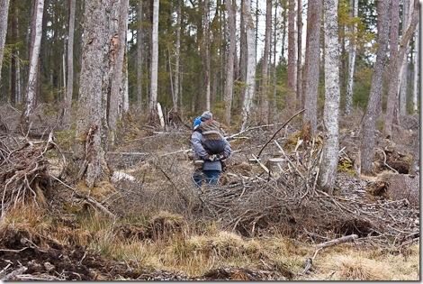 skogshaik-2