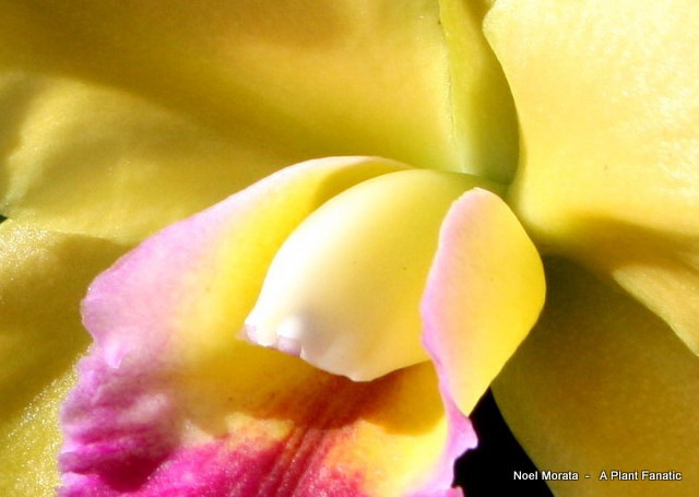 orchids4