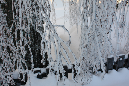 vinter8