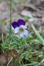 blomst5