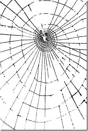 spindelvev[1]