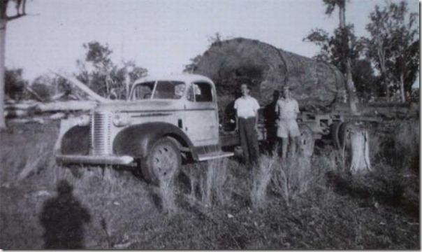 enormes árboles talados cosasdivertidas (2)