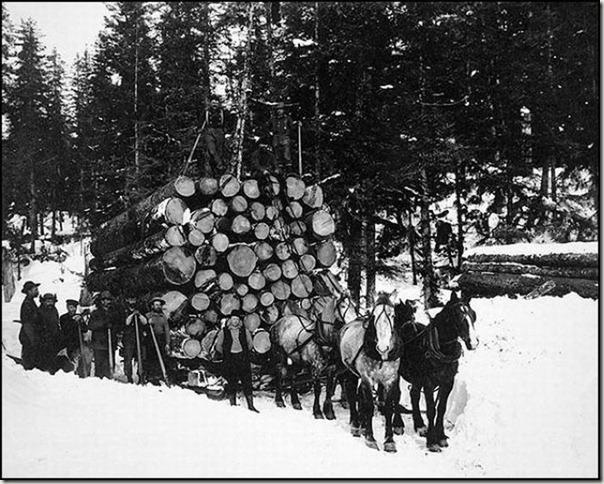 enormes árboles talados cosasdivertidas (10)