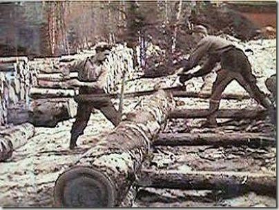 enormes árboles talados cosasdivertidas (21)