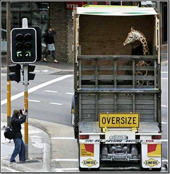 transporte de mercancias cosasdivertidas (31)