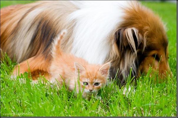 Encontro de um gatinho e um cachorro (11)