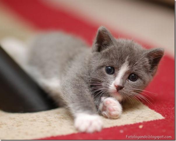 momento oinn especial gatos (103)