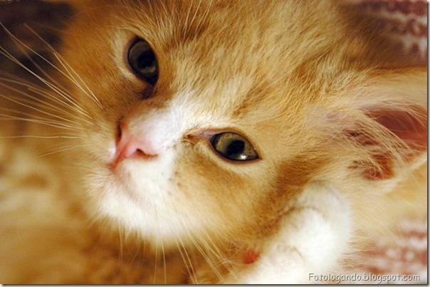 momento oinn especial gatos (97)