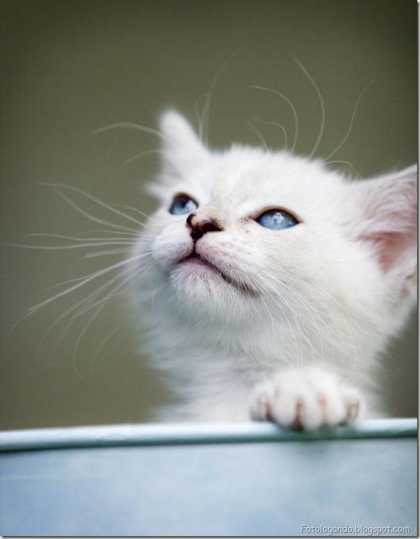 momento oinn especial gatos (84)