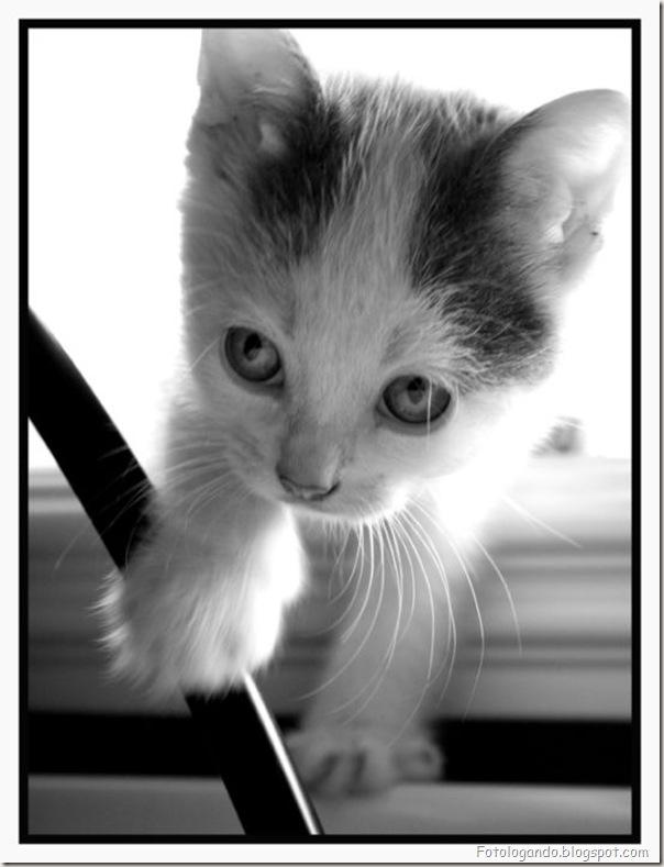 momento oinn especial gatos (83)