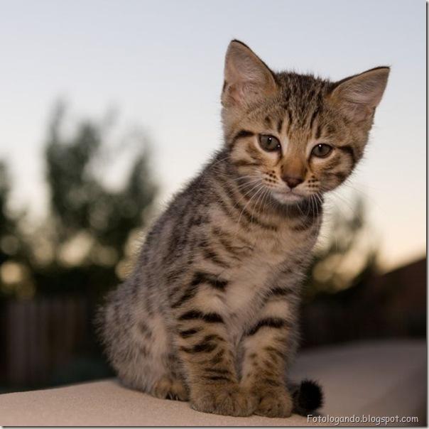 momento oinn especial gatos (78)