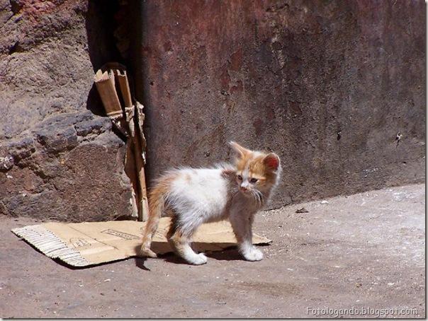 momento oinn especial gatos (74)