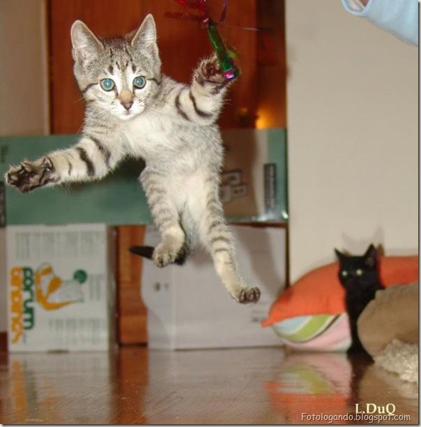 momento oinn especial gatos (71)
