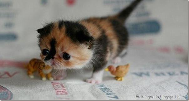 Pequeninos animais (26)