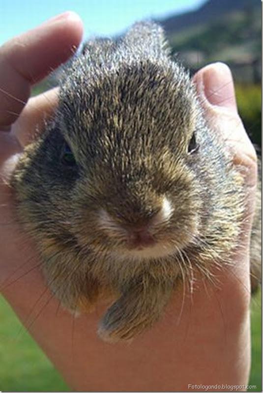 Pequeninos animais (24)