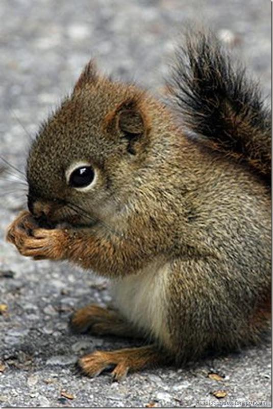 Pequeninos animais (47)