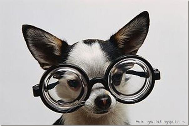 Animais de Oculos (11)