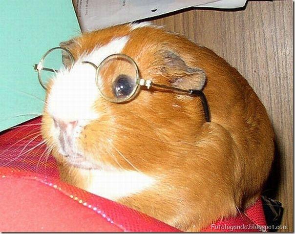 Animais de Oculos (24)