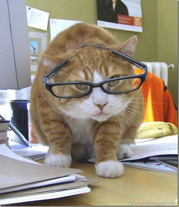 Animais de Oculos (16)