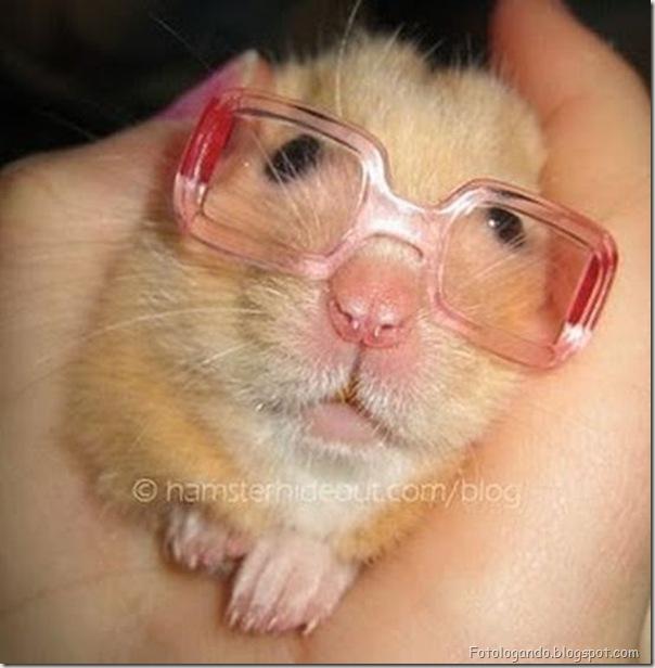Animais de Oculos (2)