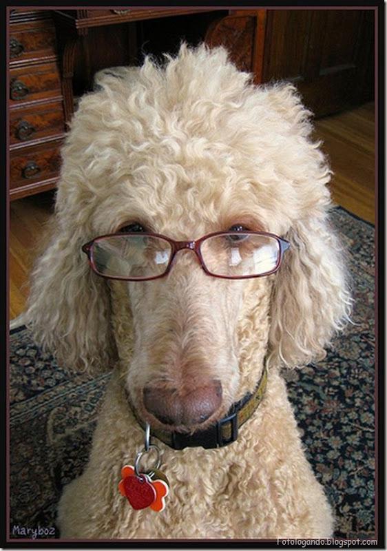 Animais de Oculos (1)